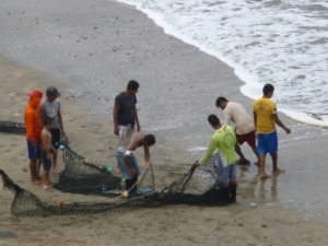 Fishermen Bringing In The Nets, Crucita, Ecuador
