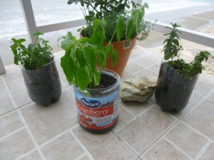 Plants In Pots Made From Used Containers and Plastic Litre Bottles